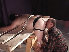 Chubby bear bent over and tied up